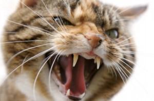 кошачий укус