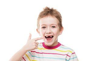 Основные функции коренных зубов